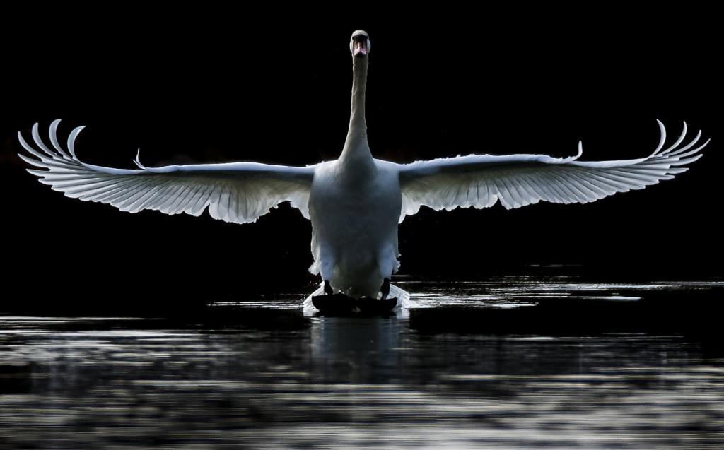 swan-community